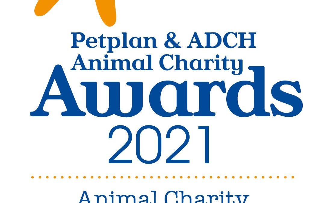 Bliss Cavalier Rescue Petplan Nominee