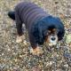 Murph wearing his smart new jumper