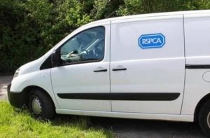 White RSPCA van