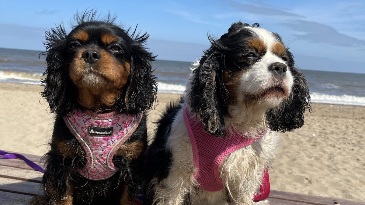 Annabelle and Aurora Cavaliers at the beach