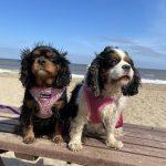 Annabelle and Aurora Cavaliers at the beach