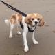 Holly on the beach